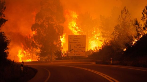 EIB donates EUR 500 000 for reconstruction after forest fires in Portugal